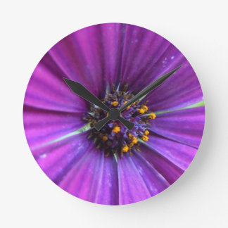 Margarita púrpura viva relojes
