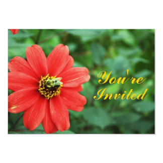 Margarita roja con la invitación de la abeja