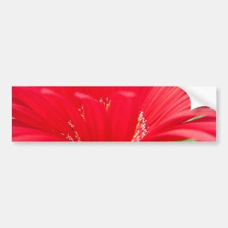 margarita roja del gerber: pegatina de parachoque