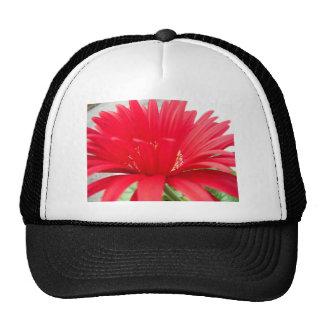 margarita roja del gerber: gorras