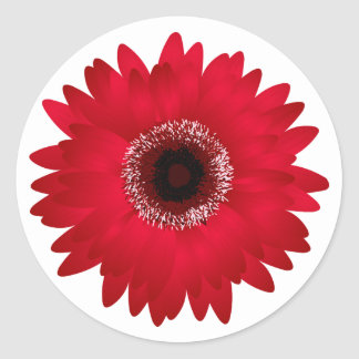 Margarita roja del Gerbera Pegatina Redonda