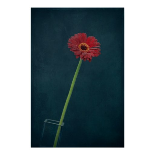 Margarita roja póster