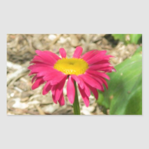 Margarita rosada brillante pegatina rectangular