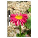 Margarita rosada brillante pizarras blancas