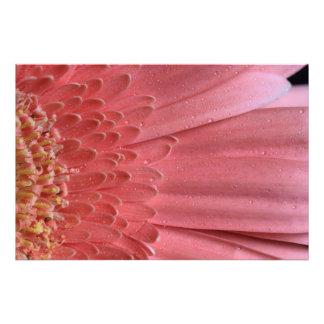 Margarita rosada coralina bonita del Gerbera Cojinete