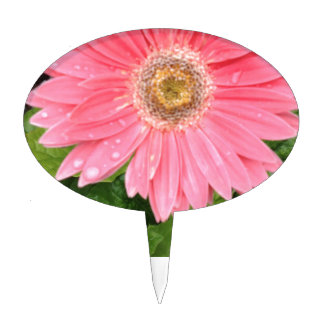 Margarita rosada de Gerber Decoración De Tarta