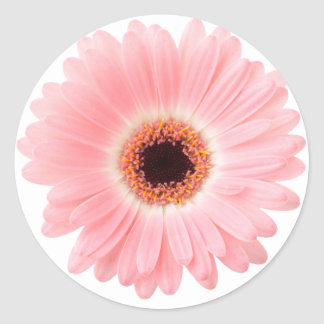 Margarita rosada del Gerbera Etiquetas Redondas