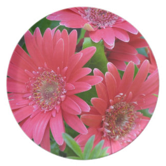 Margarita rosada del Gerbera Platos De Comidas
