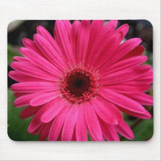 Margarita rosada del Gerbera Tapetes De Ratones