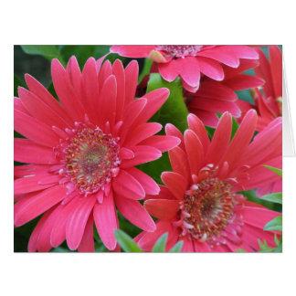 Margarita rosada del Gerbera Felicitacion