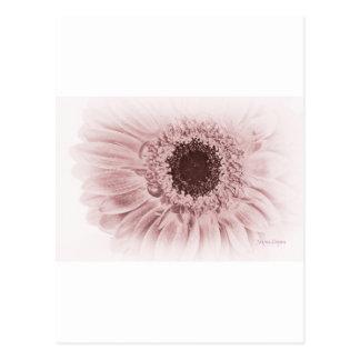 Margarita rosada elegante de Gerberra, postal de l