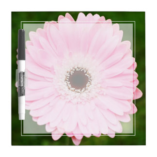Margarita rosada suave del Gerbera Tableros Blancos