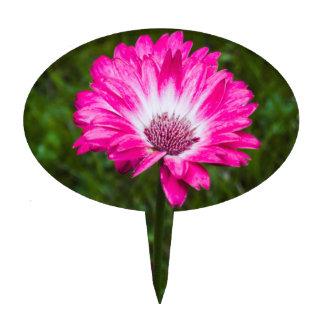 Margarita rosada y blanca del Gerbera en la Figura De Tarta