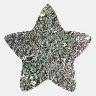 Margarita salvaje que crece en campo al lado de pegatina en forma de estrella