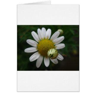 Margarita, simple y hermoso tarjeta de felicitación