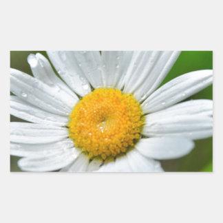 MARGARITA SPRIN de los WILDFLOWERS Marguerite-wild Etiqueta