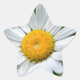 MARGARITA SPRIN de los WILDFLOWERS Marguerite-wild Calcomanías Forma De Estrella Personalizadas