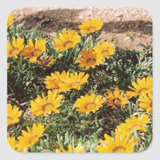 Margaritas amarillas del desierto calcomanía cuadradas personalizadas