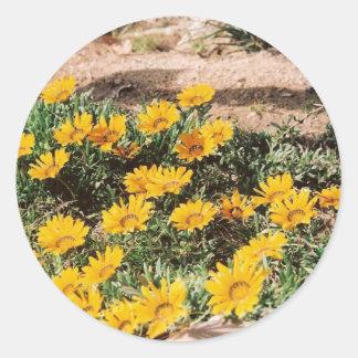 Margaritas amarillas del desierto etiqueta
