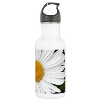 Margaritas amarillas y blancas: flores en la
