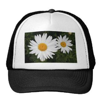 Margaritas amarillas y blancas: flores en la flora gorro