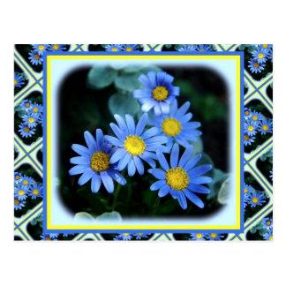 Margaritas azules tarjetas postales
