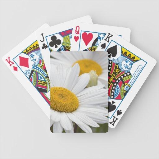 Margaritas blancas bonitas cartas de juego