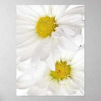 Margaritas blancas - plantilla modificada para req poster