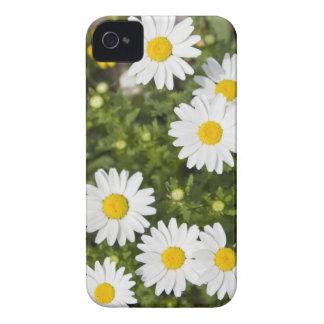 Margaritas coloridas iPhone 4 Case-Mate carcasa