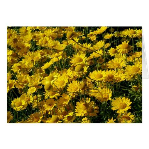 Margaritas de corona/crisantemo Coronarium Tarjeta