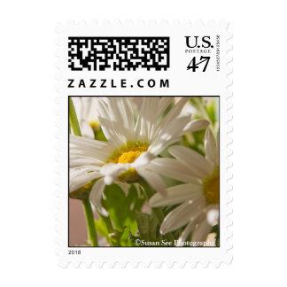 Margaritas de la primavera - franqueo, pequeño timbre postal