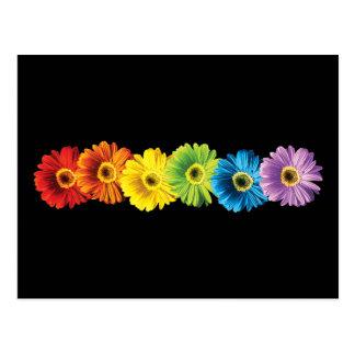 Margaritas del arco iris tarjetas postales