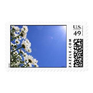 Margaritas florecientes y cielo azul en el tiempo sellos