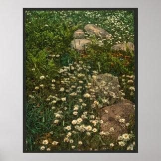 Margaritas - flores salvajes de la montaña de Adir Póster