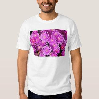 Margaritas púrpuras playeras