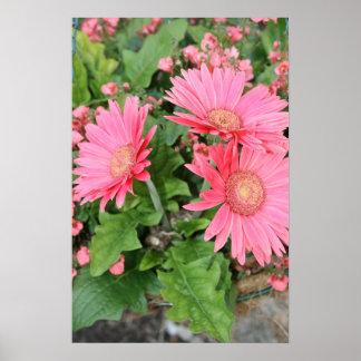 Margaritas rosadas de Gerber Impresiones