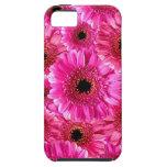 Margaritas rosadas del Gerbera iPhone 5 Case-Mate Carcasa