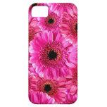 Margaritas rosadas del Gerbera iPhone 5 Fundas