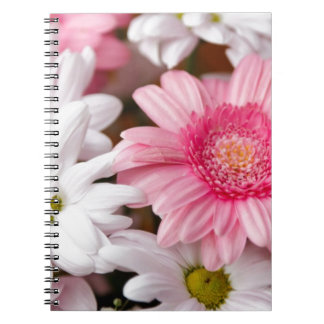 Margaritas rosadas y blancas del Gerbera Libretas Espirales