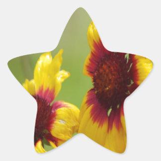 Margaritas y abeja de Shasta Pegatina En Forma De Estrella