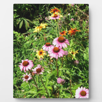 Margaritas y Wildflowers rosados Placas Para Mostrar