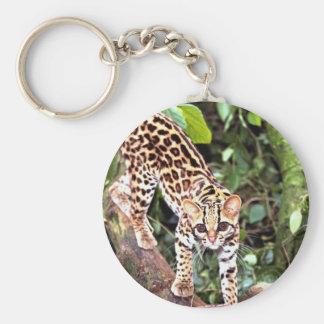 Margay (Felis wiedi) in tree Key Chain