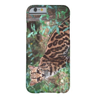 Margay, Leopardus wiedi, Native to Mexico into Barely There iPhone 6 Case