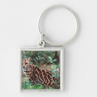 Margay, Leopardus wiedi, Native to Mexico into Keychain