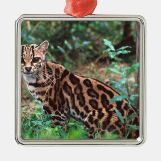 Margay, Leopardus wiedi, Native to Mexico into Metal Ornament