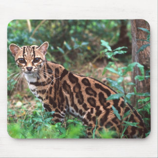 Margay, Leopardus wiedi, Native to Mexico into Mouse Pad