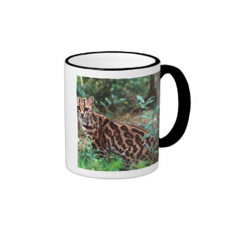 Margay, Leopardus wiedi, Native to Mexico into Coffee Mugs