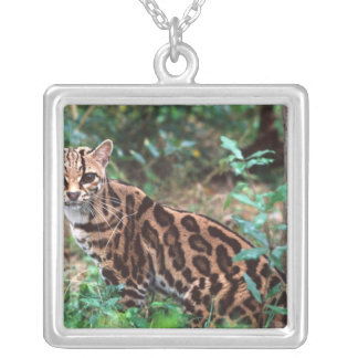Margay, Leopardus wiedi, Native to Mexico into Square Pendant Necklace