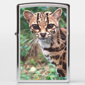 Margay, Leopardus wiedi, Native to Mexico into Zippo Lighter