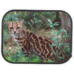 Margay, wiedi de Leopardus, nativo a México en Alfombrilla De Coche
